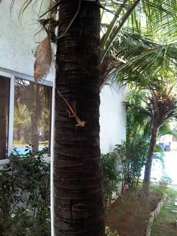 tropische Echsen