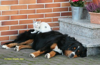 Wie Katz und Hund!